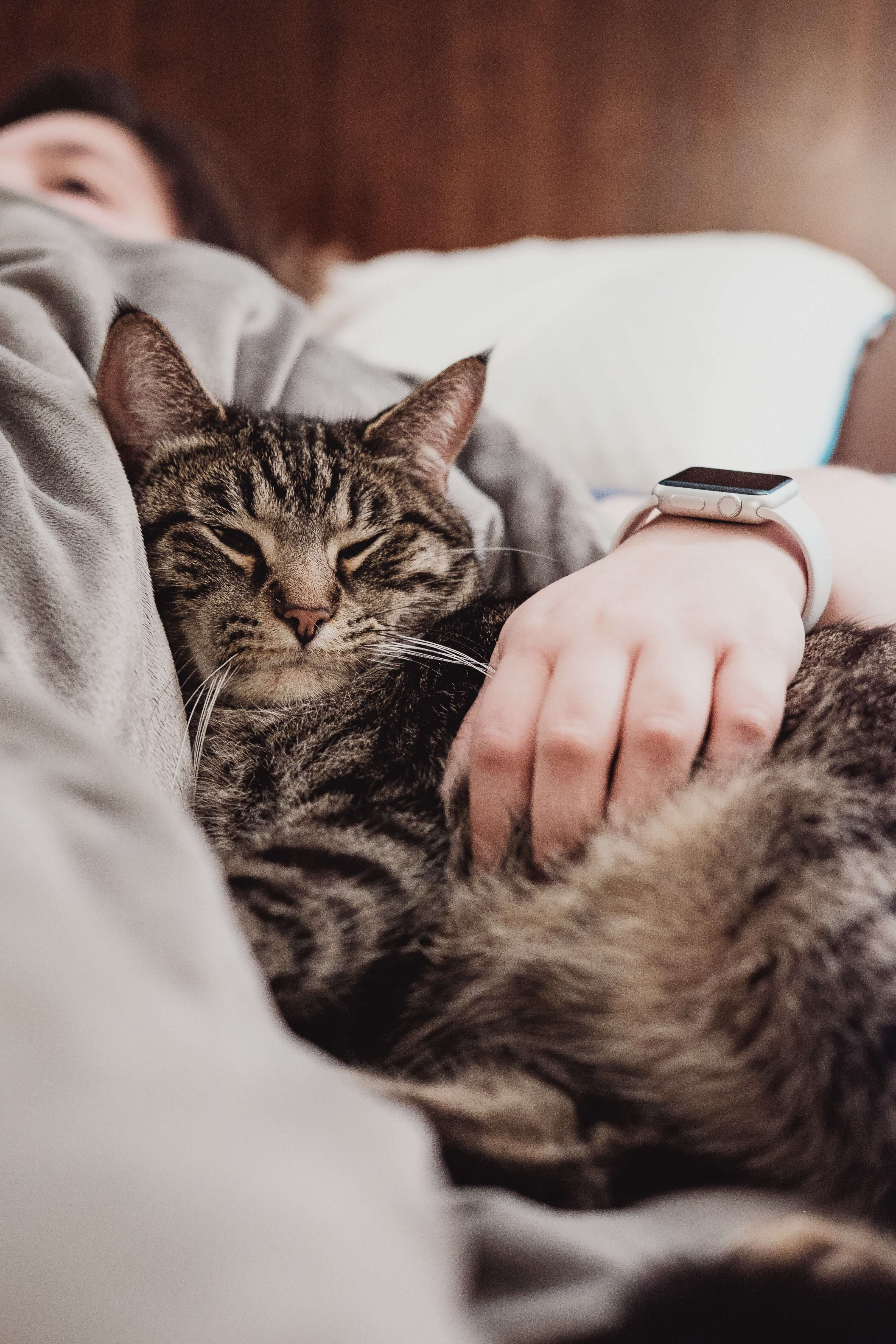 contented cat | Ultimate Pet Nutrition
