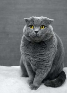 cat's facial expressions   Ultimate Pet Nutrition