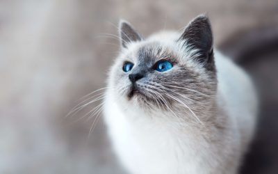 Your Cat's Facial Expressions: A Guide To Cat Expression