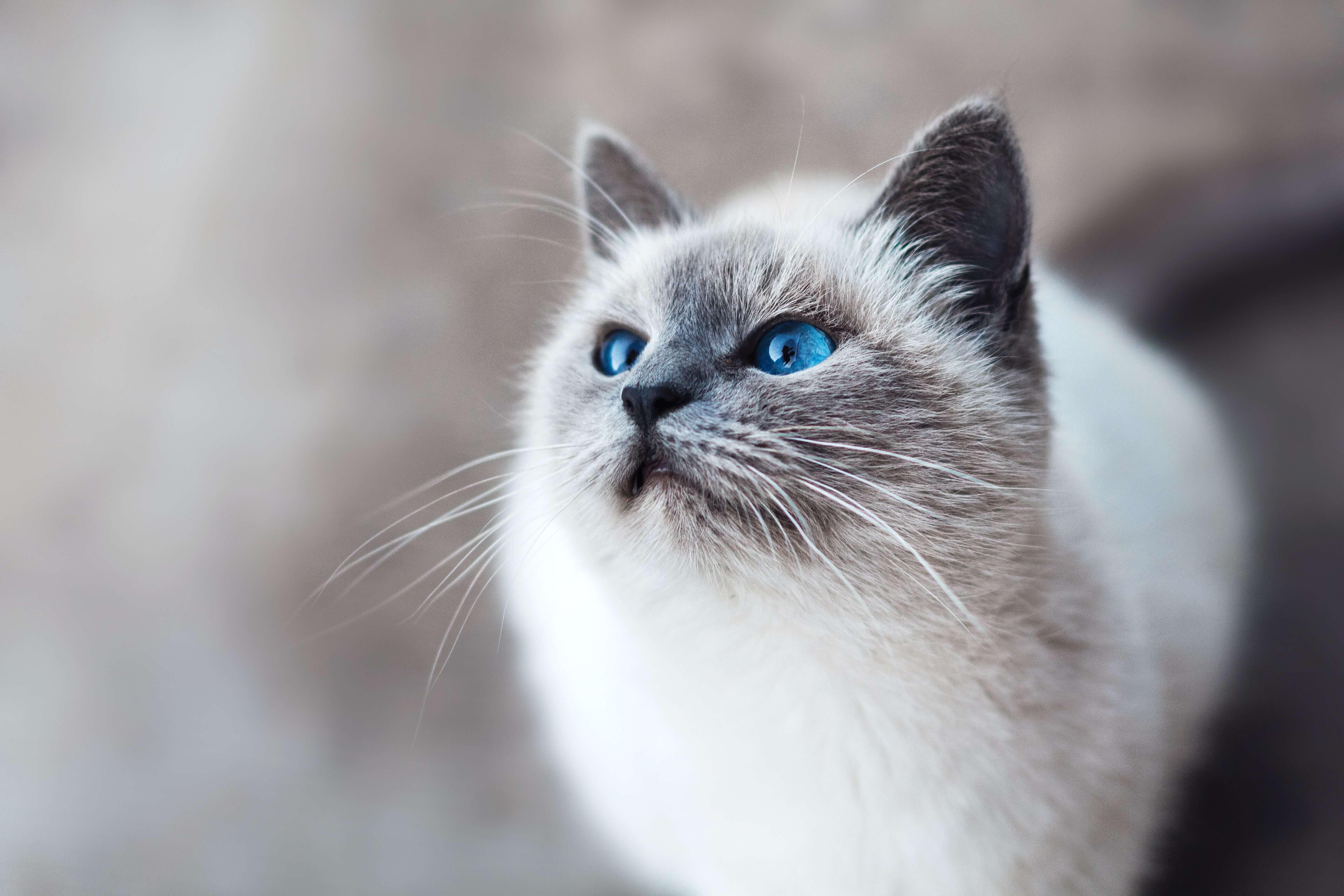 beautiful-cat   Ultimate Pet Nutrition