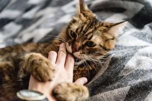 playing with cat | Ultimate Pet Nutrition