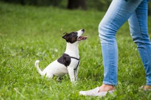 teaching dog to sit | Ultimate Pet Nutrition