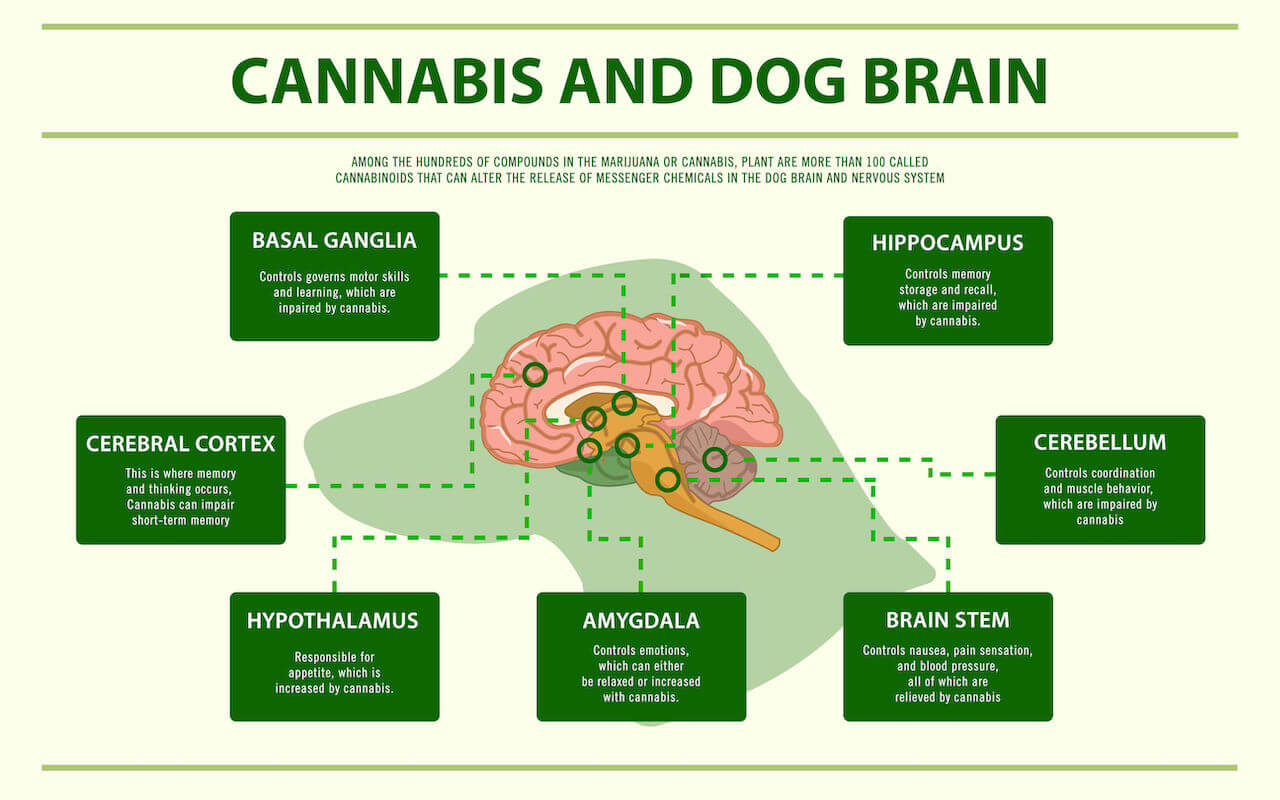 the endocannabinoid system | Ultimate Pet Nutrition