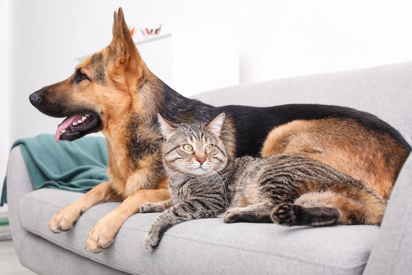 Info For Pet Parents: All About The Endocannabinoid System Of Your Pet