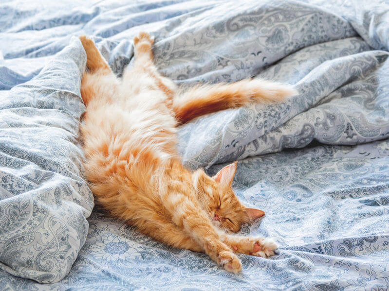 where should my cat sleep | Ultimate Pet Nutrition