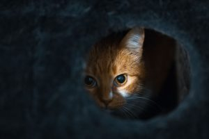why do cats like small spaces | Ultimate Pet Nutrition