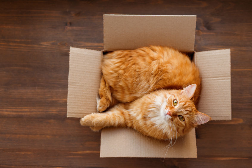 Info For Cat Parents: Why Do Cats Like Small Spaces?