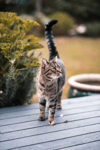 happy cat | Ultimate Pet Nutrition