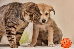 cat and dog | Ultimate Pet Nutrition