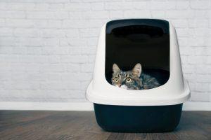 cat litter box | Ultimate Pet Nutrition