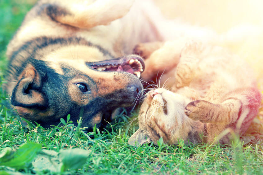 Should You Encourage Different Pet Species To Be Friends?