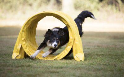 Dog Agility Classes Can Teach Your Dog New Tricks