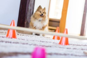 dog agility course | Ultimate Pet Nutrition
