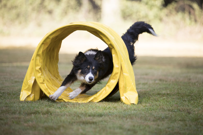 Dog Agility Classes Can Teach Your Dog New Tricks