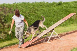 dog agility   Ultimate Pet Nutrition