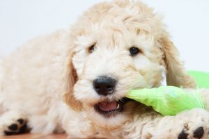 puppy chewing toy | Ultimate Pet Nutrition