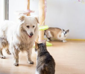dog meeting cat | Ultimate Pet Nutrition