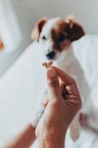 dog treat training   Ultimate Pet Nutrition