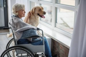 elderly woman with dog | Ultimate Pet Nutrition
