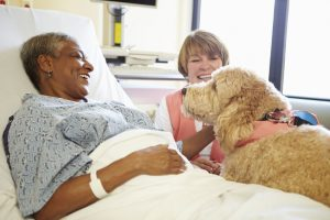 healing power of pets   Ultimate Pet Nutrition