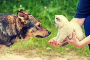 kitten meeting dog | Ultimate Pet Nutrition