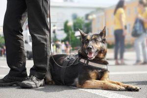 police dog | Ultimate Pet Nutrition