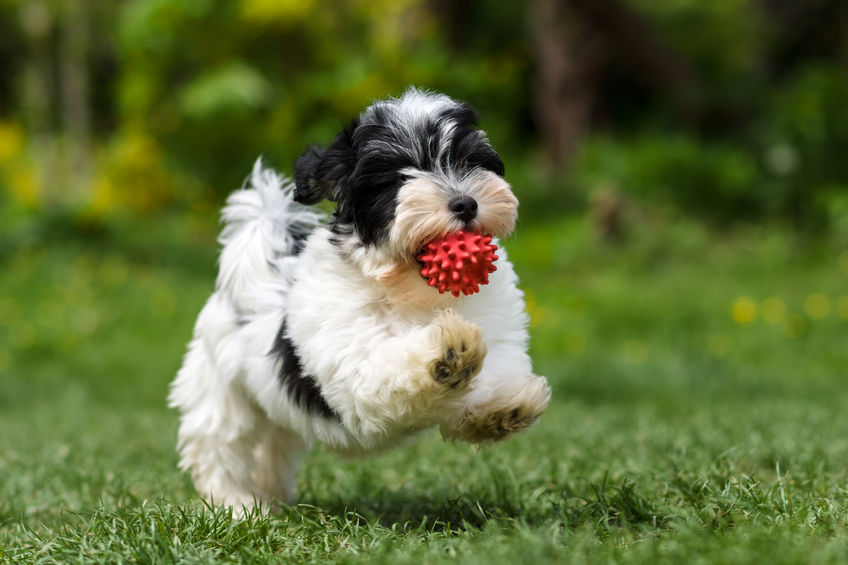 puppy running | Ultimate Pet Nutrition