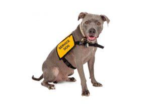 service dog | Ultimate Pet Nutrition