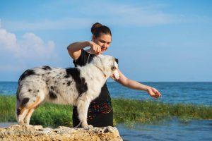 training dog   Ultimate Pet Nutrition