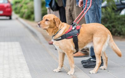 Different Types Of Service Dogs And The Gear They Use: Working Dog Vests