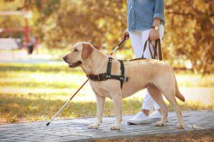working dog vests | Ultimate Pet Nutrition