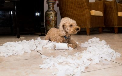 breaking bad habits in dogs | Ultimate Pet Nutrition