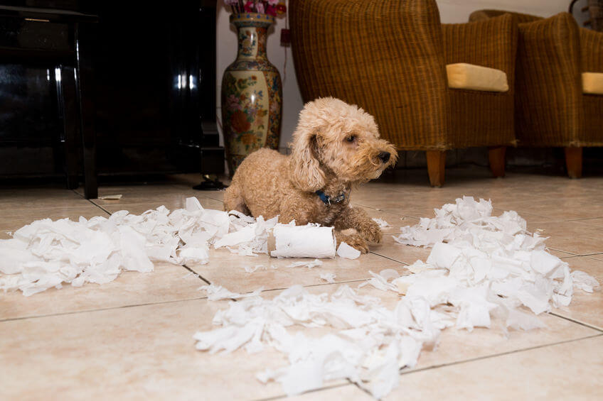 Breaking Bad Habits In Dogs: Tips For Pet Parents