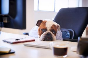 bored work dog | Ultimate Pet Nutrition