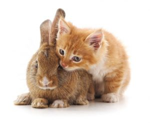 kitten and bunny | Ultimate Pet Nutrition
