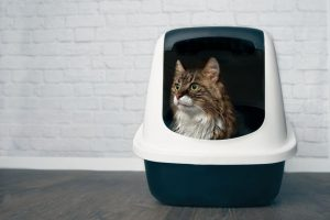 how to set up a litter box | Ultimate Pet Nutrition