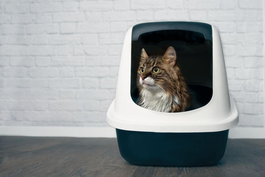 how to set up a litter box   Ultimate Pet Nutrition