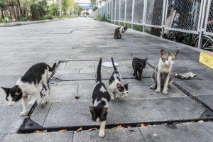 feral cat | Ultimate Pet Nutrition