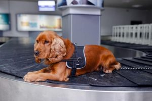 tips for flying with a dog | Ultimate Pet Nutrition