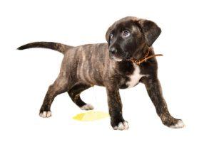 dog's bad habit | Ultimate Pet Nutrition
