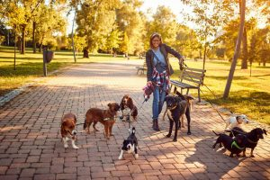 dog walker | Ultimate Pet Nutrition