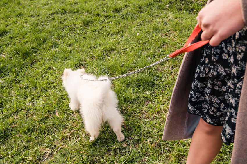 dog sniffing ground | Ultimate Pet Nutrition