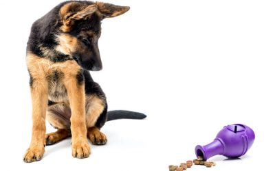 mental stimulation for dogs | Ultimate Pet Nutrition