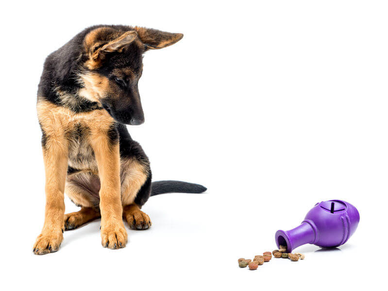 Learn How To Give Mental Stimulation For Dogs
