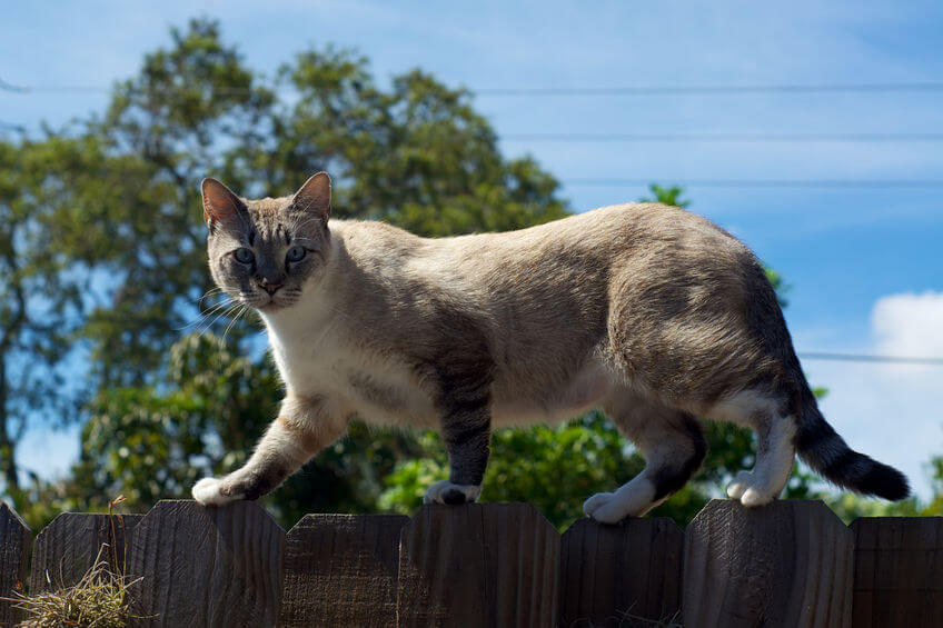 cat on fence | Ultimate Pet Nutrition