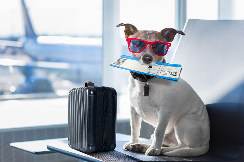 Helpful Tips For Flying With A Dog Or Cat: Have Comfortable Pet Flights