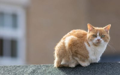 Feral Vs Stray Cats: What's The Difference Between The Two?