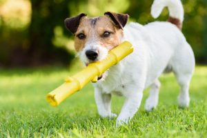 dog fetching | Ultimate Pet Nutrition