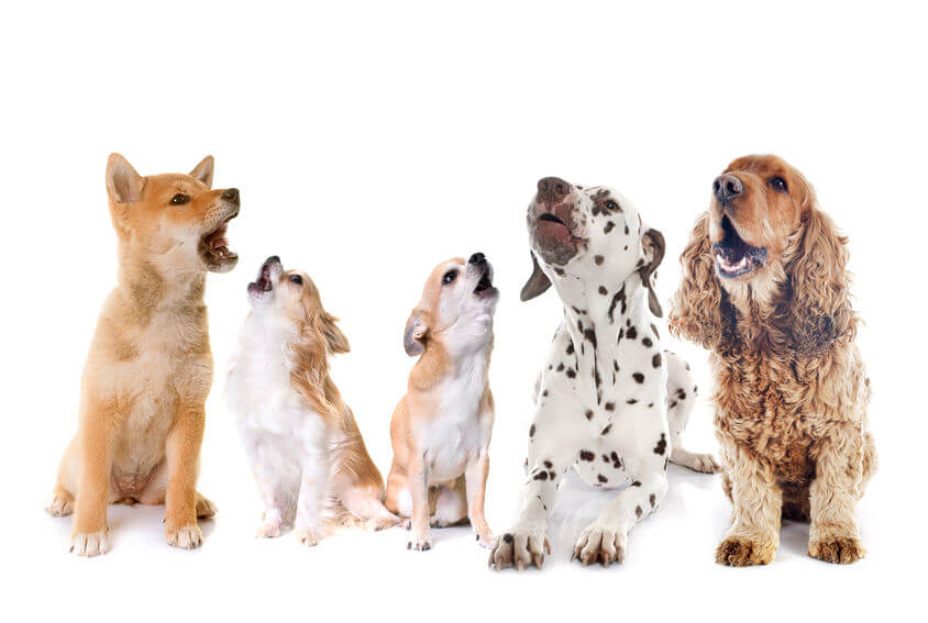 barking dogs | Ultimate Pet Nutrition