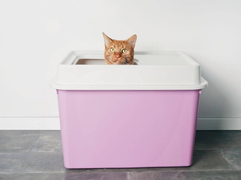 Homemade DIY Cat Litter Boxes For Cat Parents